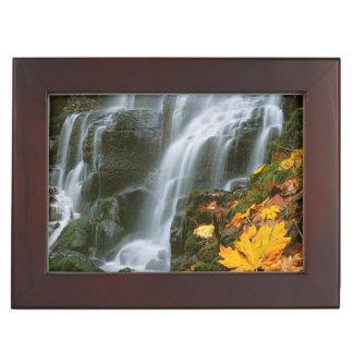 USA, Oregon, Fairy Falls, Columbia River Gorge Memory Box