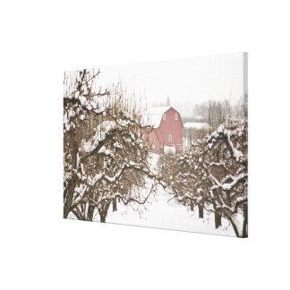 USA, Oregon, Hood River. Snow covered Apple Canvas Print