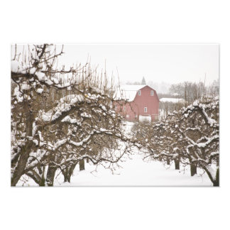 USA, Oregon, Hood River. Snow covered Apple Photo Print