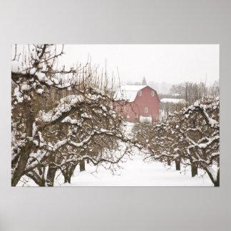 USA, Oregon, Hood River. Snow covered Apple Print