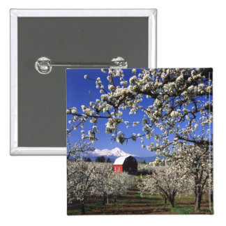 USA, Oregon, Hood River Valley, Pear orchard 15 Cm Square Badge