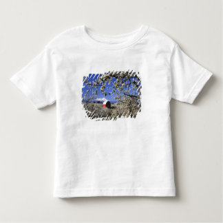 USA, Oregon, Hood River Valley, Pear orchard Toddler T-Shirt