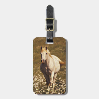 USA, Oregon. Horse in a field of daisies Luggage Tag