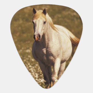 USA, Oregon. Horse in a field of daisies Plectrum