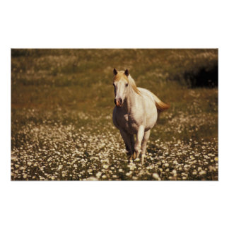 USA, Oregon. Horse in a field of daisies Poster