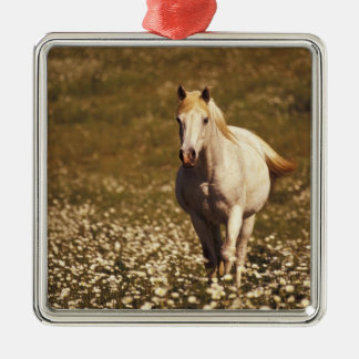 USA, Oregon. Horse in a field of daisies Silver-Colored Square Decoration