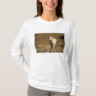 USA, Oregon. Horse in a field of daisies T-Shirt