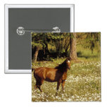 USA, Oregon. Horse in field of daisies 15 Cm Square Badge