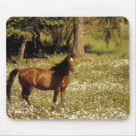 USA, Oregon. Horse in field of daisies Mouse Pad
