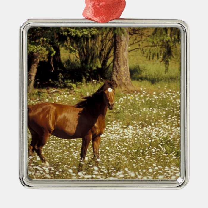 USA, Oregon. Horse in field of daisies Silver-Colored Square Decoration