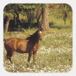 USA, Oregon. Horse in field of daisies Square Sticker