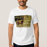 USA, Oregon. Horse in field of daisies T Shirt