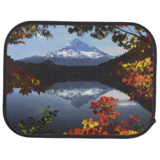 USA, Oregon, Mt. Hood National Forest. Car Mat
