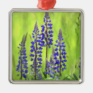 USA, Oregon, Mt. Hood National Forest, Lupine Silver-Colored Square Decoration