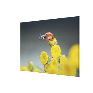 USA, Oregon, Multnomah County. Ladybug on yellow Canvas Print