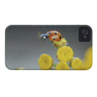 USA, Oregon, Multnomah County. Ladybug on yellow Case-Mate iPhone 4 Cases