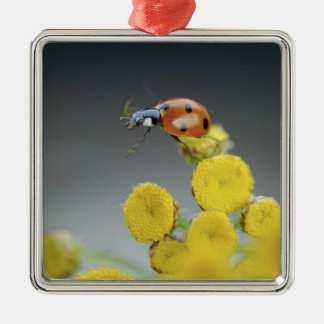 USA, Oregon, Multnomah County. Ladybug on yellow Christmas Ornament