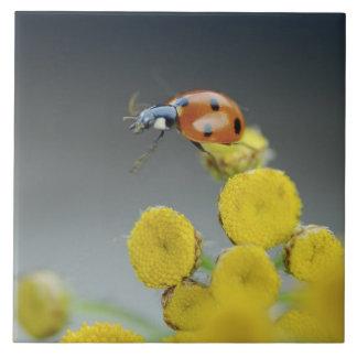 USA, Oregon, Multnomah County. Ladybug on yellow Large Square Tile