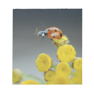 USA, Oregon, Multnomah County. Ladybug on yellow Notepad