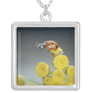 USA, Oregon, Multnomah County. Ladybug on yellow Silver Plated Necklace