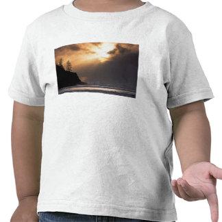 USA, Oregon, near Oswald West State Park, Late T Shirts