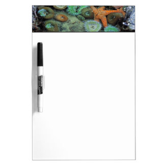 USA, Oregon, Nepture SP. An orange starfish is Dry Erase Board