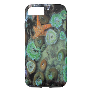 USA, Oregon, Nepture SP. An orange starfish is iPhone 8/7 Case