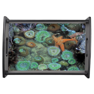 USA, Oregon, Nepture SP. An orange starfish is Serving Tray