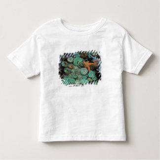 USA, Oregon, Nepture SP. An orange starfish is T-shirts