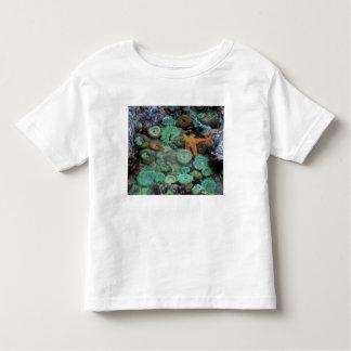 USA, Oregon, Nepture SP. An orange starfish is Toddler T-Shirt
