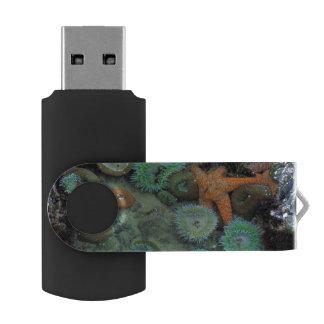 USA, Oregon, Nepture SP. An orange starfish is USB Flash Drive