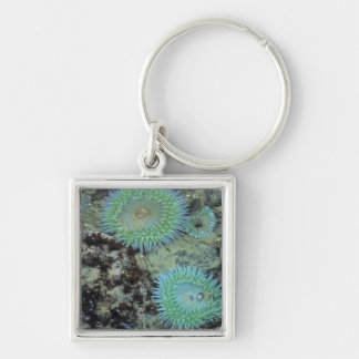USA, Oregon, Nepture SP. Jewel-toned sea Silver-Colored Square Key Ring