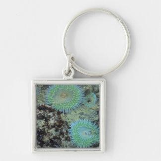 USA, Oregon, Nepture SP. Jewel-toned sea Silver-Colored Square Key Ring
