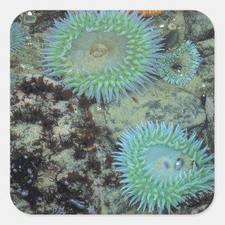 USA, Oregon, Nepture SP. Jewel-toned sea Square Sticker