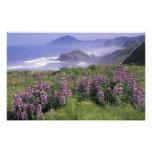 USA, Oregon, Nesika Beach. Lupine and Oregon Art Photo