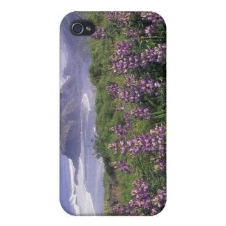 USA, Oregon, Nesika Beach. Lupine and Oregon iPhone 4/4S Case