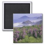 USA, Oregon, Nesika Beach. Lupine and Oregon Refrigerator Magnet