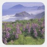 USA, Oregon, Nesika Beach. Lupine and Oregon Sticker