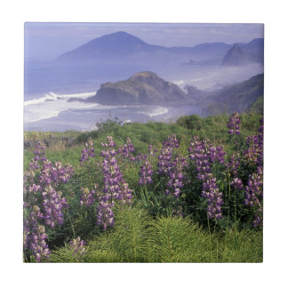 USA, Oregon, Nesika Beach. Lupine and Oregon Tile