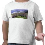 USA, Oregon, Nesika Beach. Lupine and Oregon Tshirt