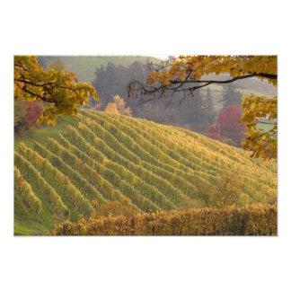USA, Oregon, Newberg. Vineyard in the fall. Photo