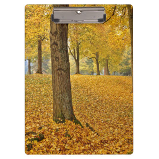 USA, Oregon, Portland. American Linden Trees Clipboards