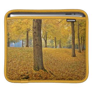 USA, Oregon, Portland. American Linden Trees iPad Sleeve
