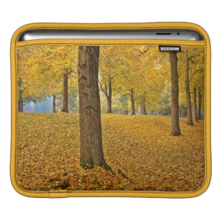 USA, Oregon, Portland. American Linden Trees Sleeve For iPads