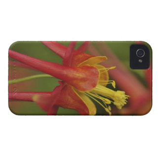 USA, Oregon, Portland. Close-up of columbine Case-Mate iPhone 4 Cases