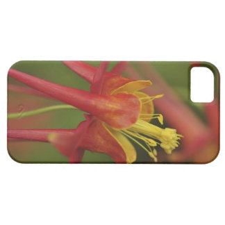 USA, Oregon, Portland. Close-up of columbine iPhone 5 Cover