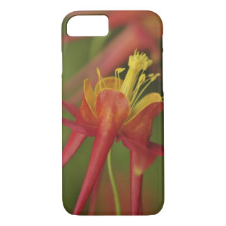 USA, Oregon, Portland. Close-up of columbine iPhone 8/7 Case