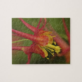 USA, Oregon, Portland. Close-up of columbine Jigsaw Puzzle