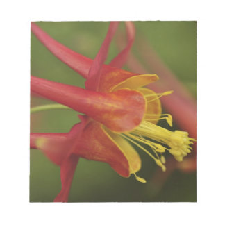 USA, Oregon, Portland. Close-up of columbine Notepad
