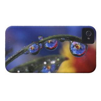 USA, Oregon, Portland, Close-up of ladybird Case-Mate iPhone 4 Case